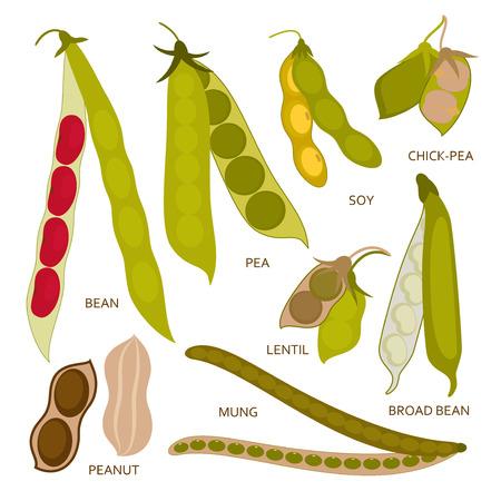 goober peas: Legumes pods set in flat style. Vector illustration.