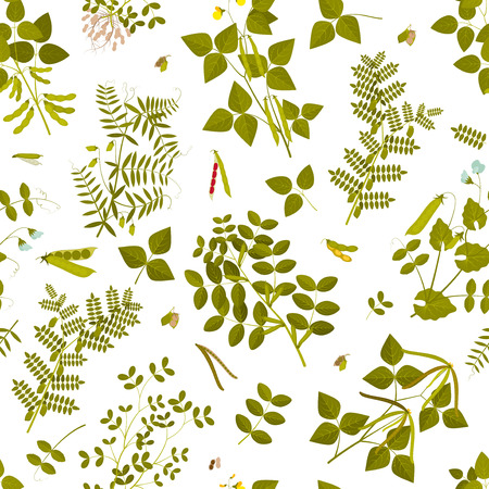 Seamless pattern with legumes plants and its leaves, pods and flowers. illustration.
