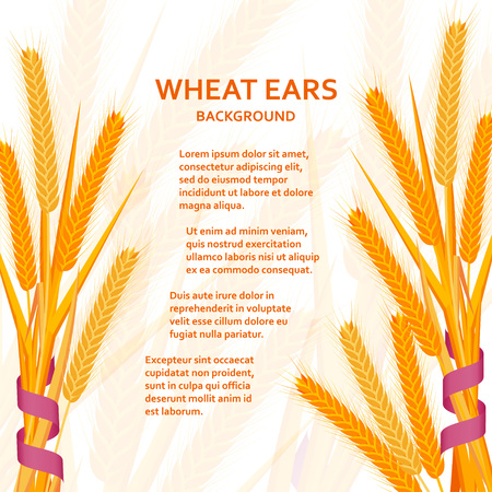 Cartoon background with wheat ears and ribbons. Colorful vector illustration.