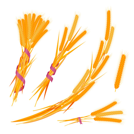 Wheat ears set with ribbons. Colorful vector illustration.