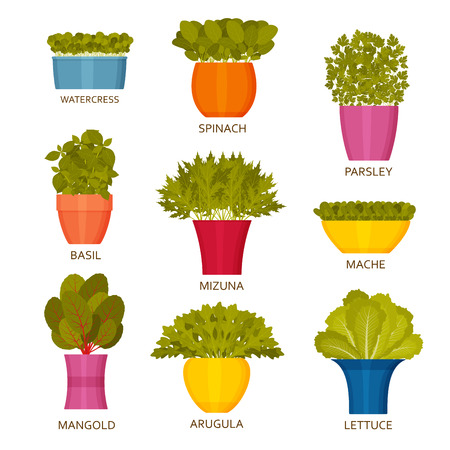 Indoor gardening icons with lettuce. Vector illustration.