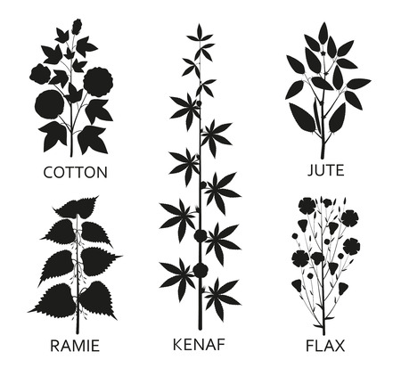Cotton, ramie, kenaf, jude and flax plants with leaves, pods and flowers. Vector illustration