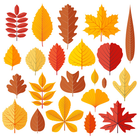 Set of tree autumn leaves isolated on the white. Cartoon vector illustration.