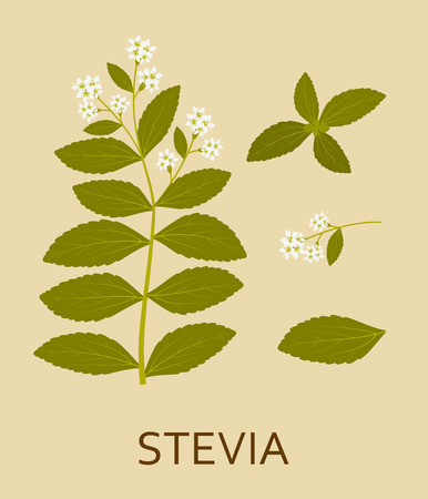 Stevia plant with leaves and pods.