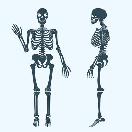 Human bones skeleton silhouette vector.