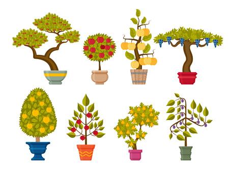 Bonsai tree set. Decorative plants in flower pots. Vector illustration. Illustration