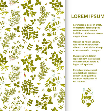 Flat poster or banner template with legume plants. Vector illustration.