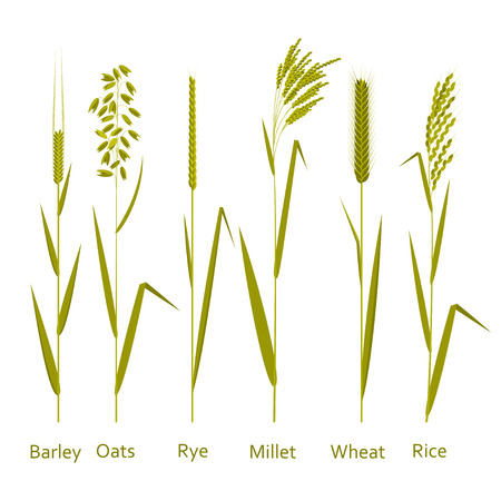 Cereals plant set.