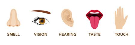 Cinque icone di sensi umani impostate. Cartoon design naso, occhi, mani, orecchie e bocca. Illustrazione vettoriale. Vettoriali