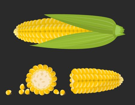 Set of sweet golden corn cobs and grains isolated on the black background. Vector illustration. Vektorové ilustrace