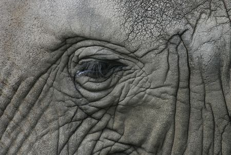 eye of african elephant Stock Photo - 6860770