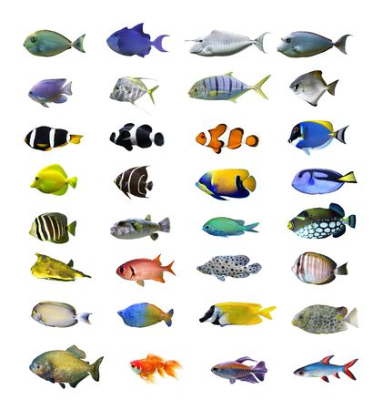 marinelife: Tropical fish collection on white background