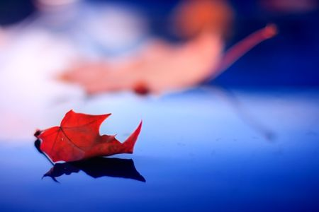 Maple leaf at sunset reflected on blue varnished surface Banco de Imagens