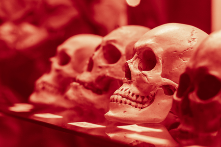 Human skulls standing on the glass shelf. Black and white toned to red shades photo. Stock Photo