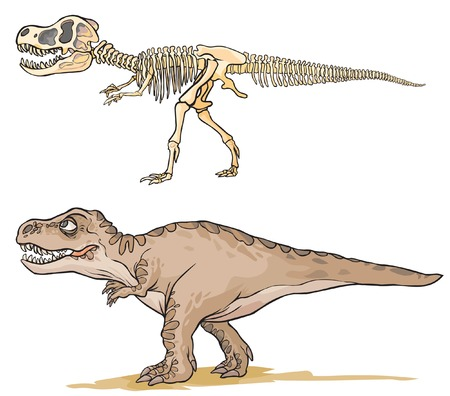 skeleton cartoon: Dinosaur T-Rex. Cartoon image as a skeleton and flesh.