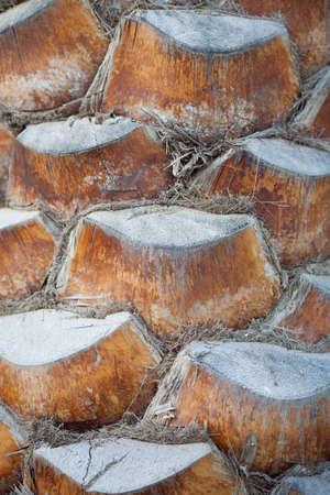 bark of palm tree: Palm Tree Trunk Stock Photo