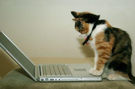 lectura y escritura: Un gatito utilizando un equipo port�til