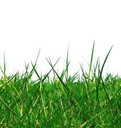 Green grass isolated with white copy space Stock Photo - 291804