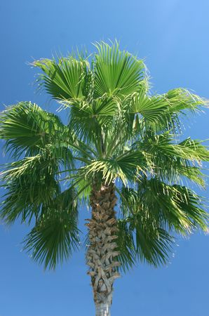 palmtree against a clear blue sky Stock Photo - 371528