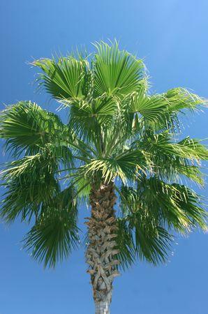 palmtree against a clear blue sky Stock Photo - 371528