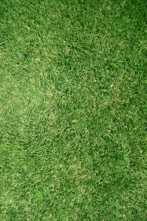 recently: Real healthy grass - perfect as a texture or as a background - grass has recently been cut