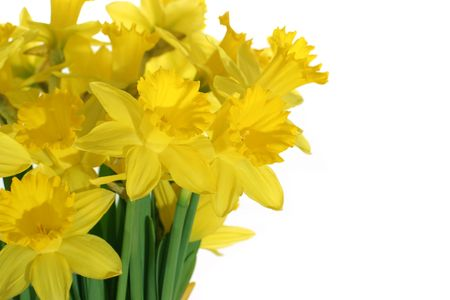 bouqet: Daffodils bouqet isolated on white background