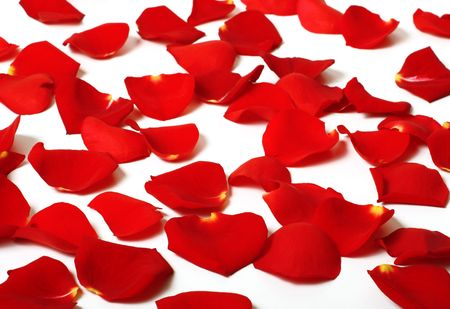 rose petals scattered around Stock Photo