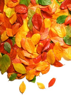 Colorful backround image of fallen autumn leaves with copy spaceperfect for seasonal use photo
