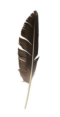 feather pen: Bird feather isolated on white background