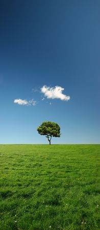 blissful: Beautiful summer landscape with a single tree in green meadows - plenty of copy space