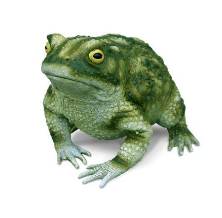 grenouille: Bullfrog r�plique isol�e sur fond blanc  Banque d'images
