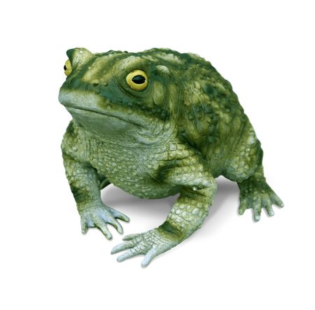 frog prince: Bullfrog replica isolated on white background Stock Photo