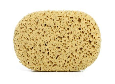 Sponge isolated on white photo