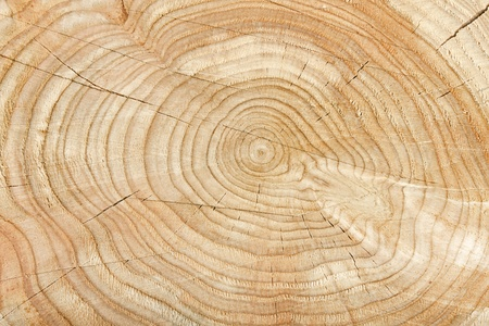 Close-up of a cross section of a tree stump showing aging circles photo