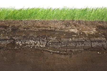 Sezione trasversale di erba verde e strati di terreno sotterraneo sotto
