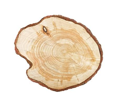 Tronco d'albero isolato su sfondo bianco Archivio Fotografico
