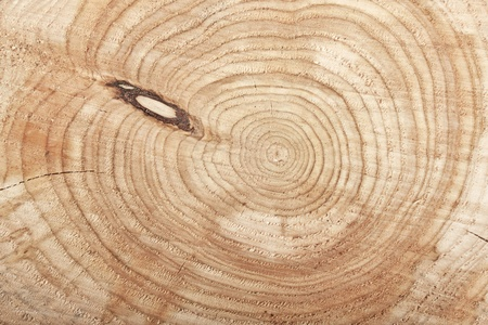 Top view Close-up of cut tree stump