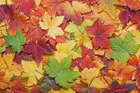 Beautiful autumn leaves filling the frame Stock Photo
