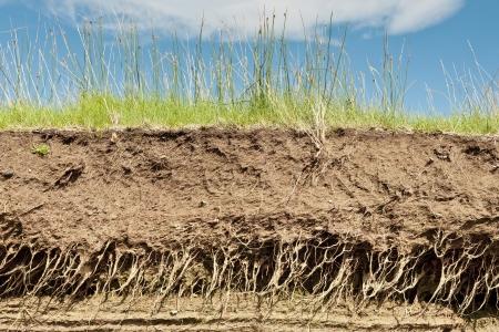 plant with roots: Secci�n transversal de la tierra con ra�ces y capas de suciedad en un d�a de verano