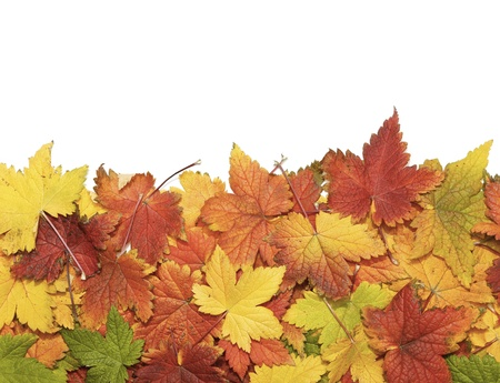 pile of leaves: Beautiful autumn leaves isolated on white with copy space