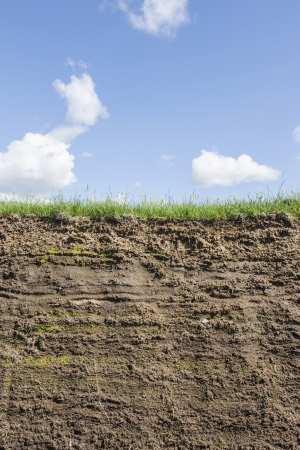 bisected: Segment of grass and earth on a beautiful summer day
