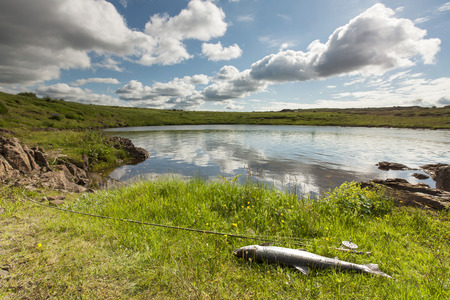 Atlantic salmon and fly rod on the river bank photo