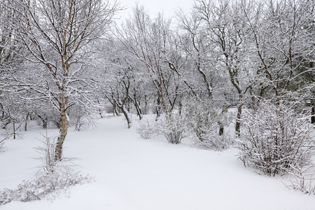 snowfalls: Beautiful winter day in the forest after a fresh snowfall Stock Photo