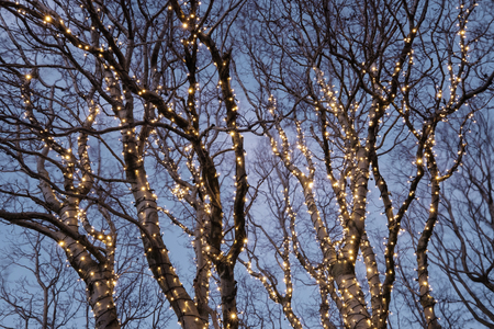 tree decorations: Beautiful christmas decorations in a tree Stock Photo
