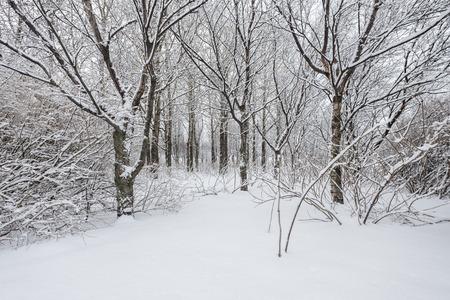 Hermoso día de invierno en el bosque después de una nevada