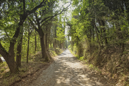 breaking through: Sunlight breaking through foliage on a paved forest road Stock Photo