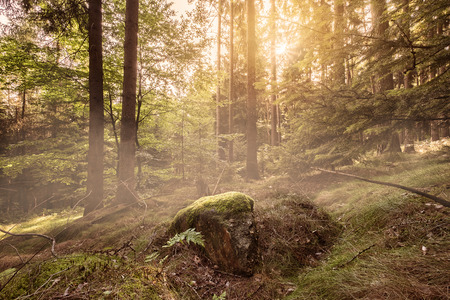 plantlife: Sun coming up in a beautiful forest setting