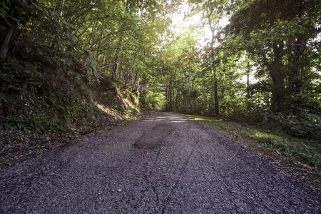 empedrado: La luz del sol se rompe a través del follaje en un camino forestal asfaltada Foto de archivo