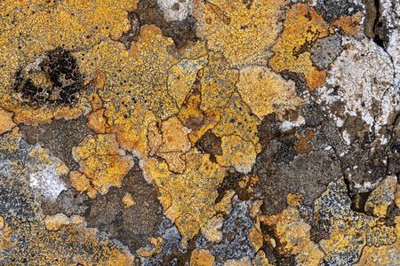 Colorful and abstract lichen formation on rocks  Banco de Imagens