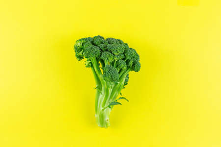 Raw Broccoli on yellow background. Edible green plant. Copy space for text.